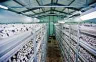В Крыму может появиться крупнейшее на Юге Украины производство шампиньона и вешенки
