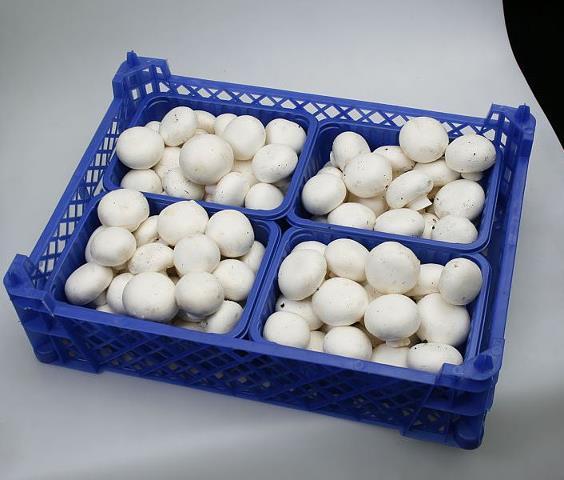 Цена гриба стабильна, но уровень продаж не высокий