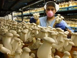 Gourmet_Mushrooms_Large_1