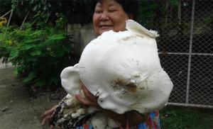 Giant-Mushroom-1