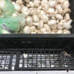 «Главная тенденция года – владельцы грибных предприятий изменили отношение к наемным работникам», - Лина Туровская