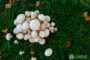 Как Национальный День Грибов 15 октября используют для продвижения грибов в разных странах