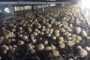 Результаты обещанного розыгрыша покровной почвы от Торадо