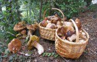 После лета фермы наращивают мощность, а в Западной Украине появился лесной гриб