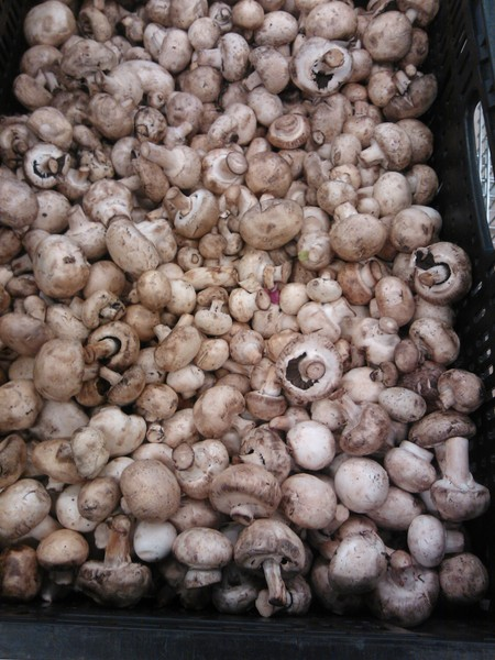 It was not to get to the supermarket: once again the quality of mushrooms in retail