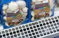 Рынок и производство грибов в Турции