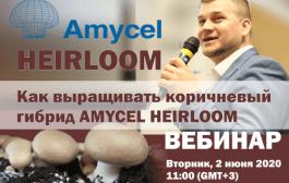 Выращивание Amycel Heirloom. Запись вебинара