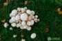 В Киевской области стало мало гриба