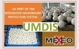 По цене производителя: оригинальный Armex 5 + Mexacid и другие препараты польского поставщика MEXEO в магазине УМДИС