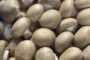 Обзор рынка гриба за 10 марта. Спрос после праздников несколько снизился